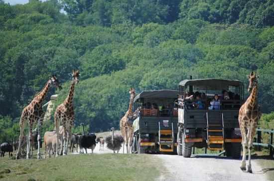 Port Lympne Safari